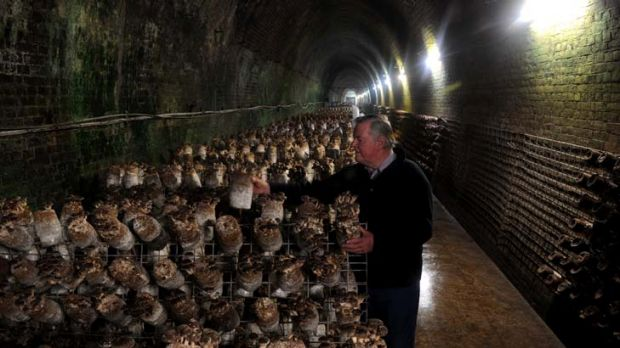 The Li-Sun Exotic Mushrooms business is situated in a dis-used railway tunnel in Bowral. Owner, Dr. Noel Arrold, tends ...