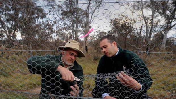 Mulligans Flat  Sanctuary ranger in-charge Peter Mills, left, and TAMS Parks and Conservation Service executive director ...