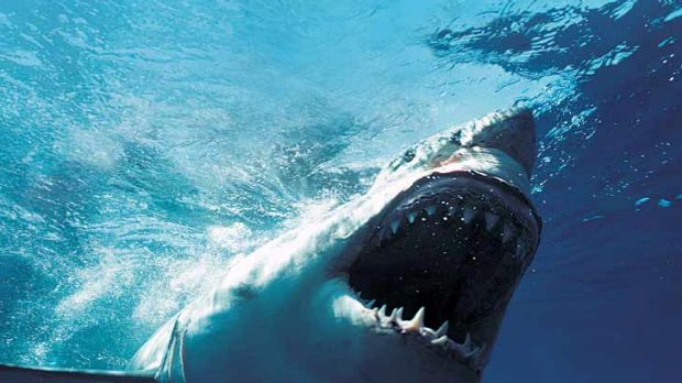 The Great Whites of fast fashion are approaching.