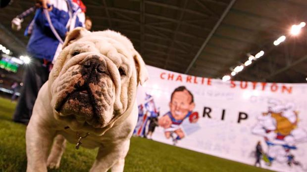 Vale: Western Bulldogs mascot Sid, part of a guard of honour in memory of Charlie Sutton.