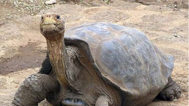 Sadly no longer with us ... Lonesome George.