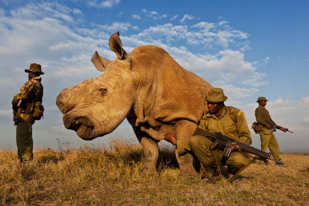 World Press - 1st prize Nature Stories. An anti-poaching team guards a northern white rhino, part of a 24-hour watch, at ...