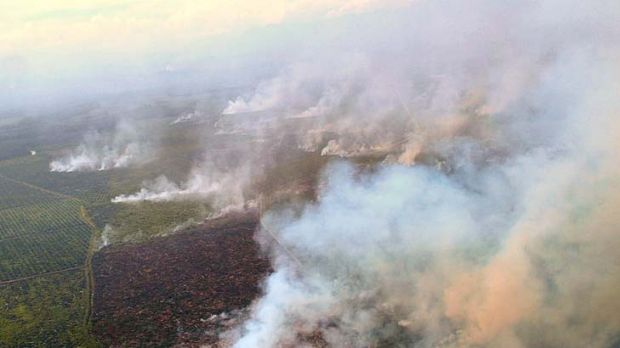Under investigation ... burning in the Tripa peat forests in Aceh, northern Sumatra, to make way for palm oil ...