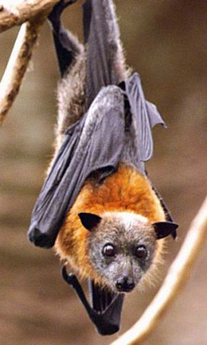 Animals like bats are renown to magnify the spread of disease.