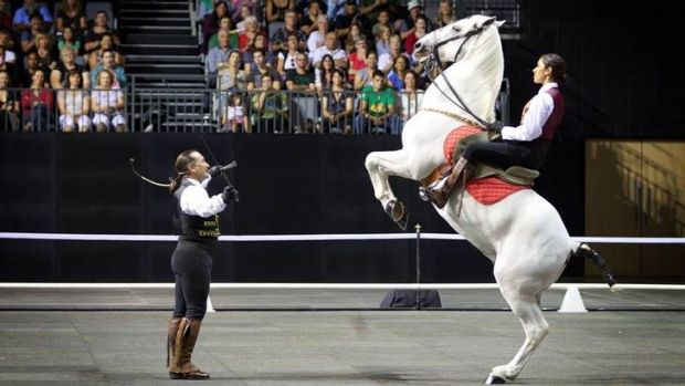 The magnificent white Stallions of Spain are coming to Canberra on August 19.