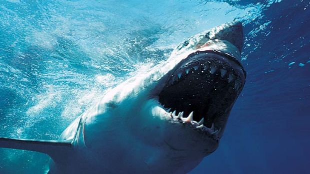 Fatal shark attacks continue ... is this dangerous ocean creature worth protecting?