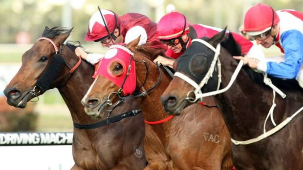 Racing NSW has audited all racetracks and is putting in place measures to ensure racing and training surfaces are ...