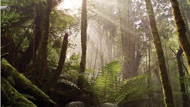Tasmania's Tarkine - the next forest flashpoint?