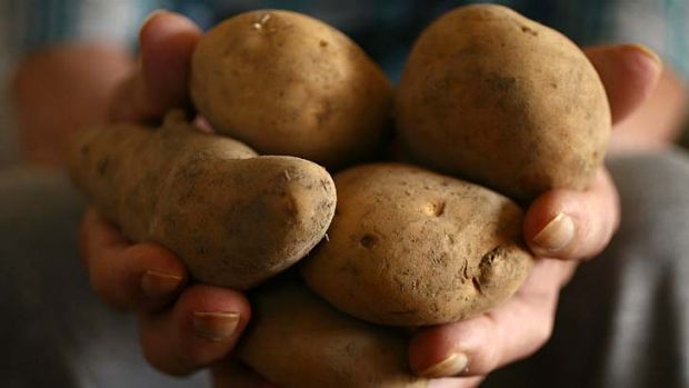 Zebra chip disease affects starch and sugar levels in potatoes, making them unfit for sale.