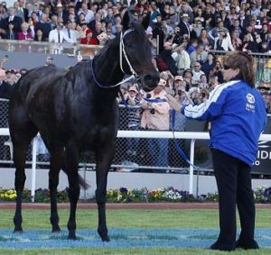 If Black Caviar is to return to the track, she could do a farewell tour of Australia.