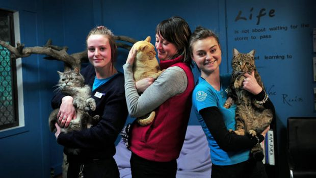 """Alicia Coutts' ACT RSPCA workmates, from left, holding the silver cat """"London"""" Hannah Mostead, holding the gold cat ..."""