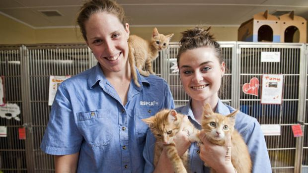 Just seven months ago ... Alicia Coutts and Lauren Gillan, with ginger kittens Mexico, Gingy, and Killer.