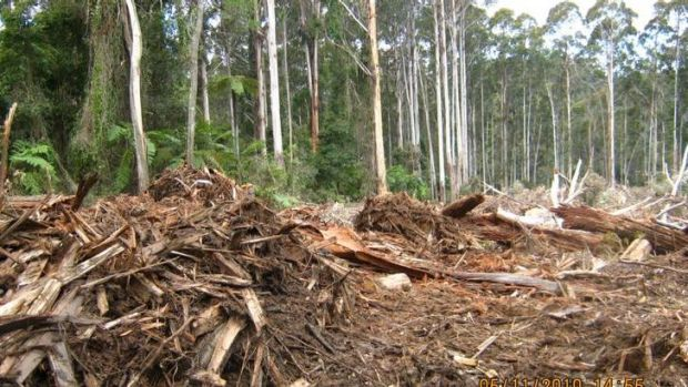 Logging in the Orbost Forest.