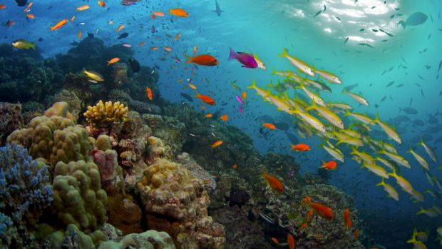 Australia was warned that the Great Barrier Reef could be put on the World Heritage in Danger list.
