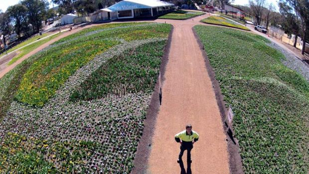 View from above ... Floriade waiting to bloom, as seen from photographer Jay Cronan's quadcopter.