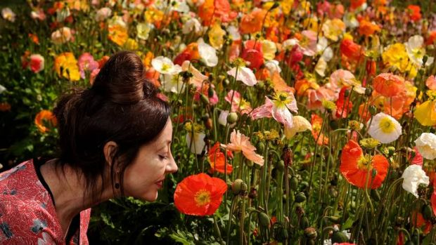Colleen Petch, Fashion designer Leona Edmiston is the face of Floriade for this year amongst the flowers today