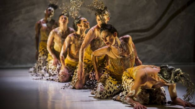 Dancers perform the Spinifex scene from Terrain, a performance that reflects the experiences of the Arabunna people.