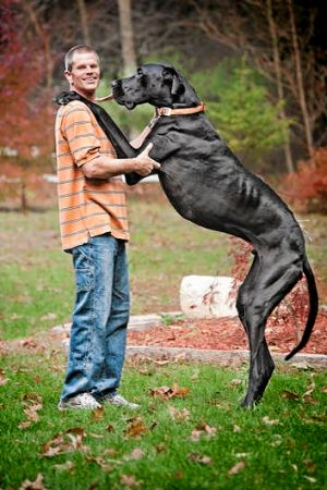 Kevin Doorlag stands with his dog Zeus, the world's tallest canine, according to the Guinness Book of World Records.