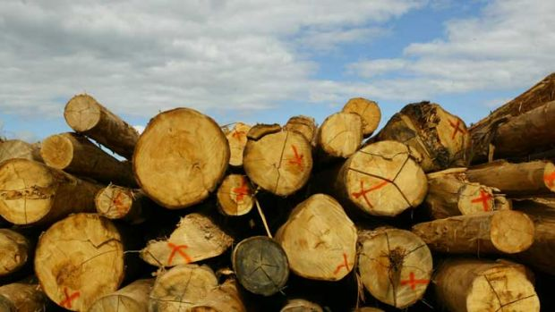 The mishandling of Gunn's Tasmanian pulp mill project has set the company on a downward spiral.
