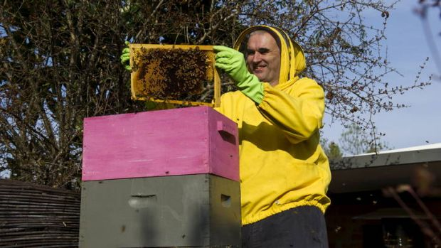 Dermot AsIs Sha'Non checks on bees in Pearce, they will be looked after by the NAB while he attends the AFL grand final.
