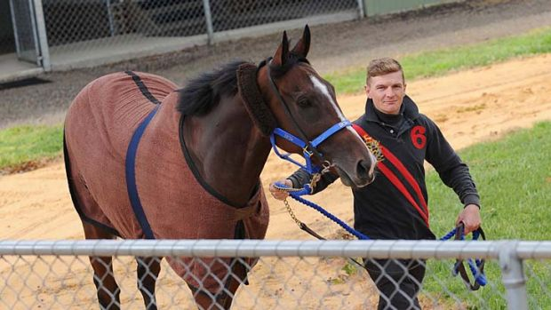Recovering: Galileo's Choice and Tom Daly stretch their legs at Werribee this week.