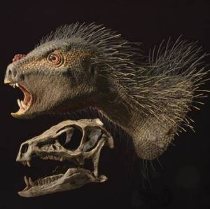 """A model and skull of a new dinosaur species named Pegomastax africanus, or """"thick jaw from Africa""""."""
