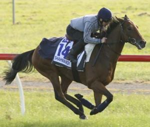 Touch of class ... Kerrin McEvoy puts French stayer Shahwardi through his paces at Werribee yesterday.