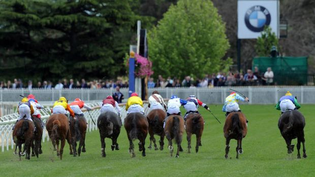 The field heading to the finish of the Thoroughbred Club Stakes.
