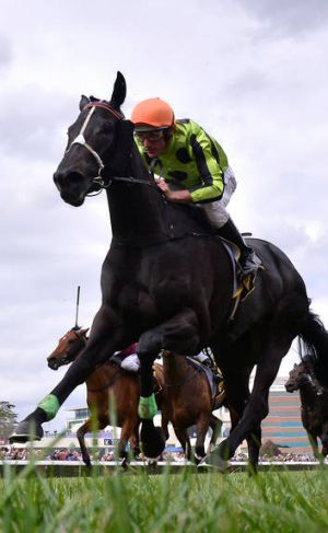 Damien Oliver takes Commanding Jewel to victory yesterday.