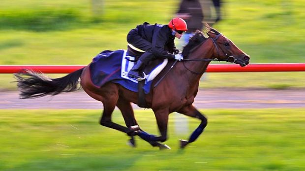 What sets Dunaden apart from the majority of horses in the Caulfield Cup is his class.