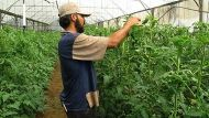 Gaza agriculture (Video Thumbnail)