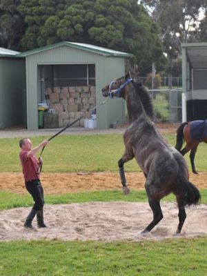 Attitude ... a confident Jakkalberry plays up for Alex Cairns at Werribee yesterday.