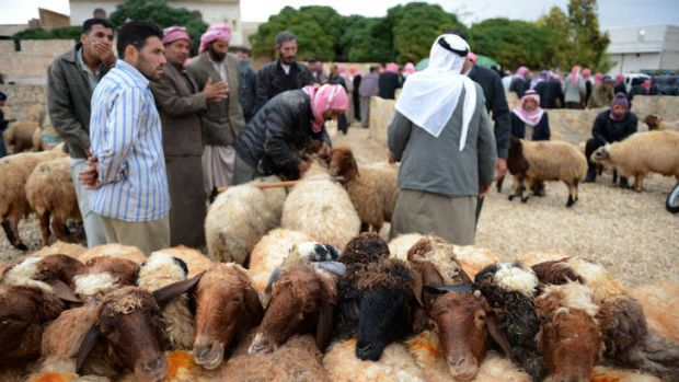 Respite ... Syrian men inspect sheep at a market outside Aleppo as they prepape to celebrate  Eid al-Adha.