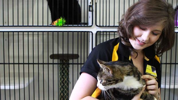 Saved … Emily McCallum with Poppy and Ozzie, awaiting adoption, at Chatswood Petbarn.