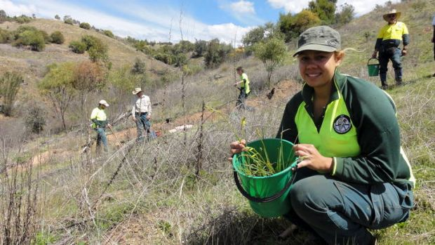 Krystal Hurst getting ready to plant with Yurung Dhaura group members in the background.