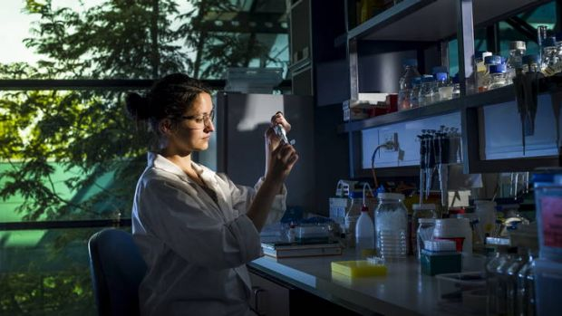 Research scientist, Dr Maud Bernoux works in the lab. She is studying how plants trigger a response to disease at the CSIRO.