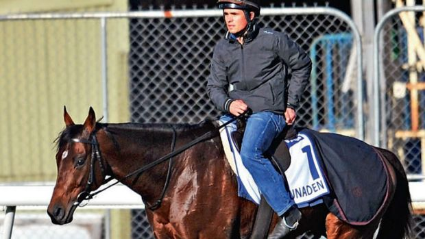 Lined up: Melbourne Cup favourite Dunaden at Werribee on Sunday. The Reserve Bank may also deliver the goods.