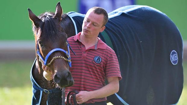 Outsider … Jakkalberry enjoys a stroll at Werribee.