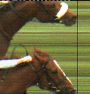 On the nose: Dunaden wins from Red Cadeaux in last year's Melbourne Cup.