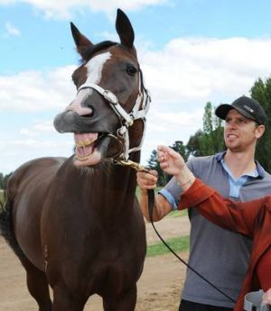 Canberra trainer Matthew Dale.