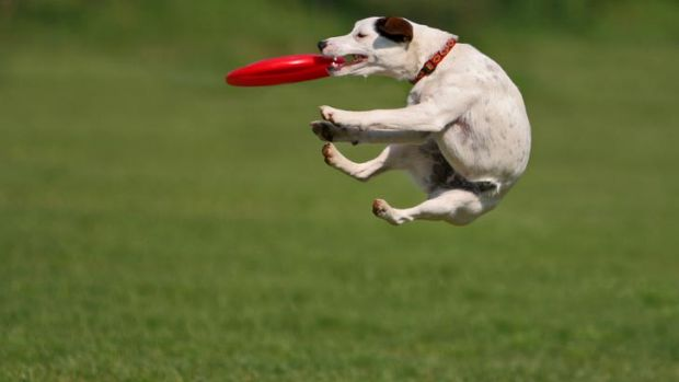 Off the leash ... Canberrans are being asked to comment on the location of a new dog park.