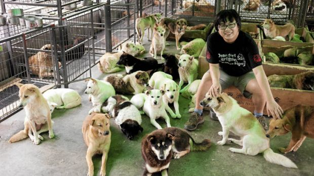 A man's best friends? … Qiao Wei at Qiming Animal Protection Centre.