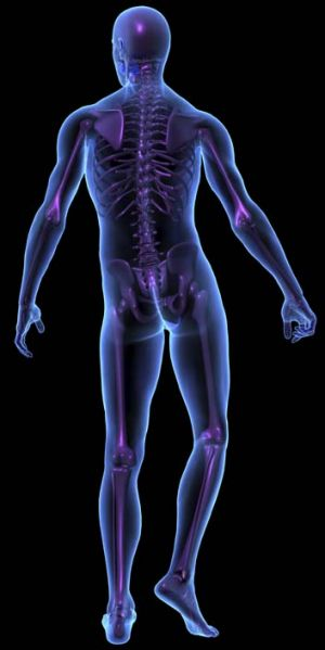 The male's spine does not mature until their early 20s and the load being placed on a fast bowler's spine at an early ...
