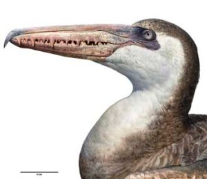 A Pelagornis - a giant prehistoric bird with a five-metre wing span and serrated beak.