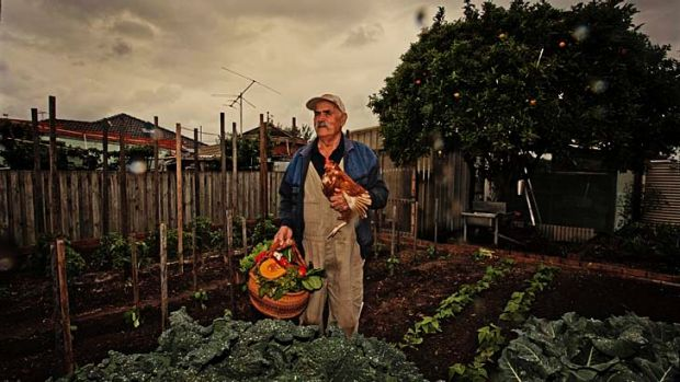 Sisto Lucarelli has the evening meal in hand in his suburban veggie garden.