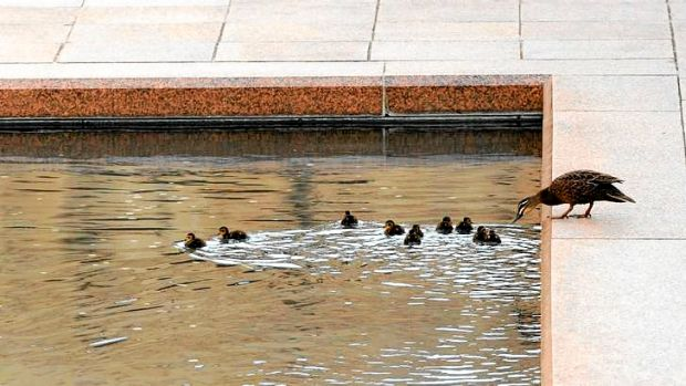 A duck and her ducklings in the pool of reflection.