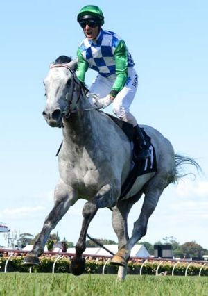 Impressive ... Glen Boss on Puissance De Lune won the The Queen Elizabeth Stakes.