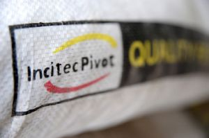 Incitec Pivot's share price has plunged, then risen again.