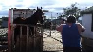 Racing industry denies horse abuse claims (Video Thumbnail)