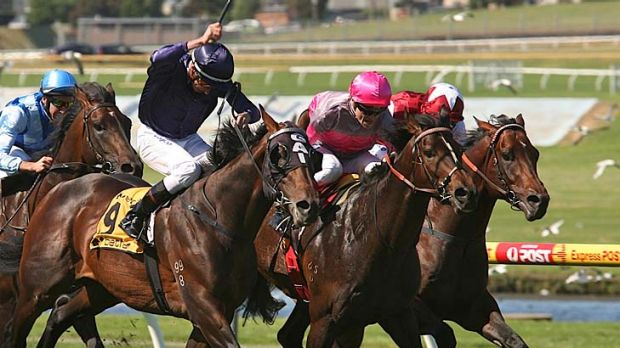 Craig Wlliams (centre, in pink) wins the Sandown Guineas on So Swift last year.